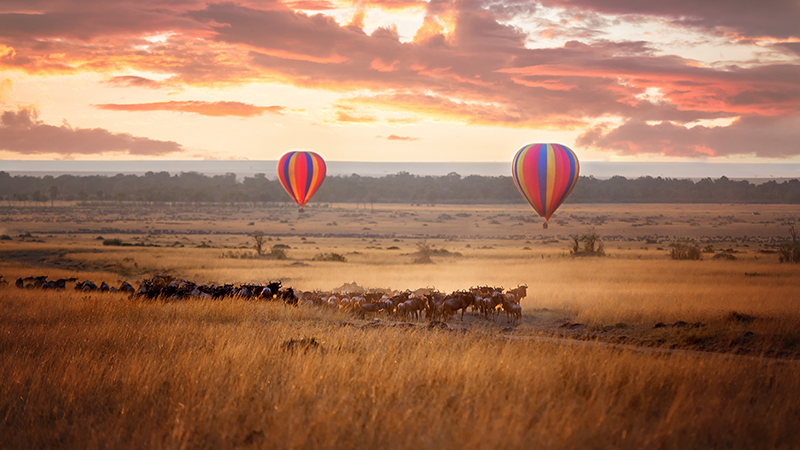 The Great Migration Safari Holiday Packages